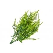 Зелень пучок аспарагуса 37см