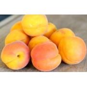 Масло абрикосовое рафинированное, 10 мл