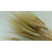 Колоски ржи сухоцвет (20шт.)