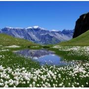 """Отдушка косметическая """"Альпийские цветы"""" 10 мл"""