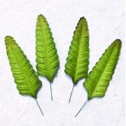 Листочки папоротника (10 шт.)