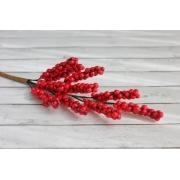 Веточка бузины с красными ягодками