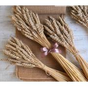 Колоски пшеницы сухоцвет (10шт.)